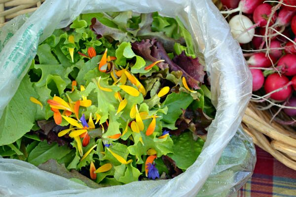 Lettuce with Edible Flowers